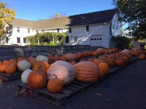 ClearviewFarms_Gallery12
