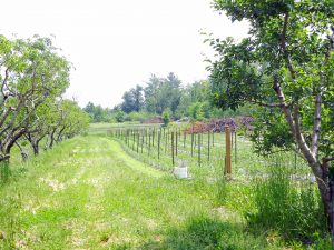 ClearviewFarms_Gallery22